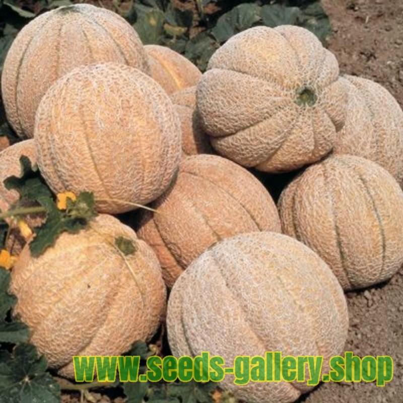 Superstar Melonen Samen