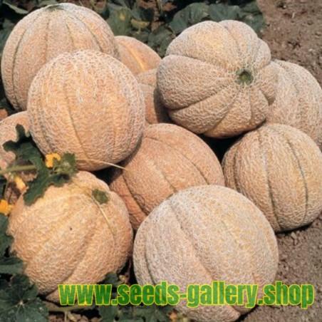 Superstar Melon Seeds