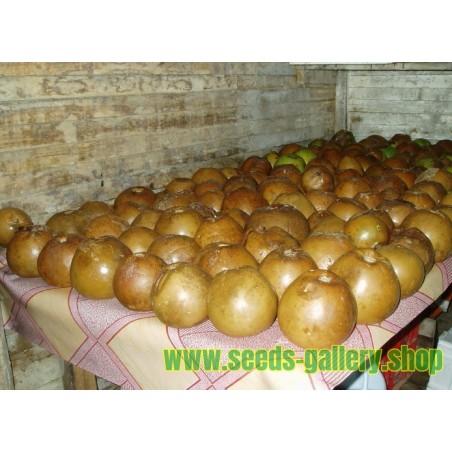 Borojó Seeds (Alibertia patinoi)