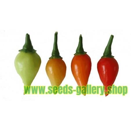 CALORO Chili Samen (Capsicum annuum)