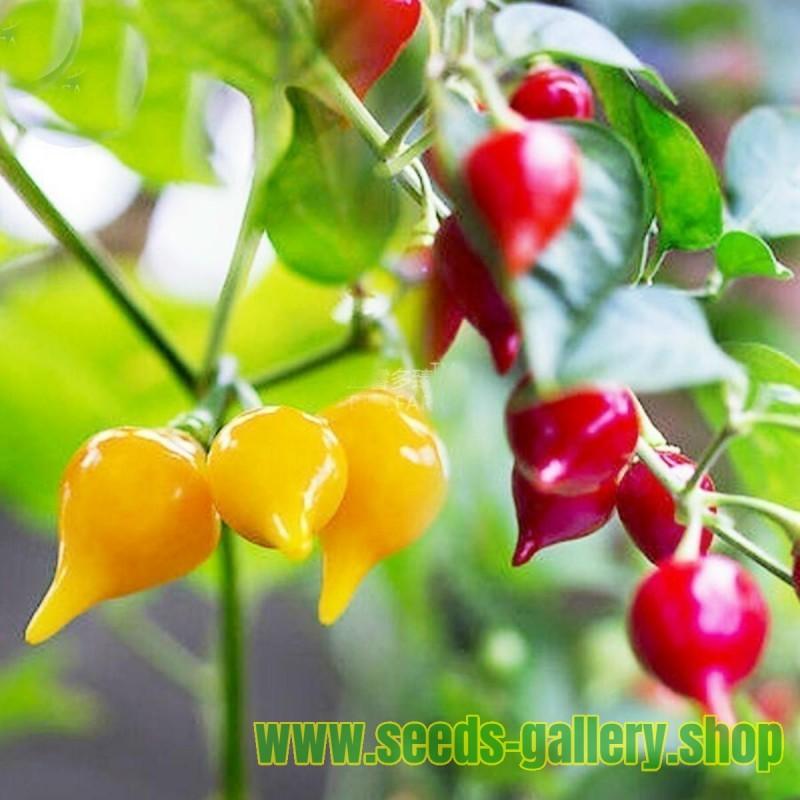Sementes De Pimenta Chupetinho - Biquinho Vermelho ou Amarelo