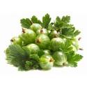 White Gooseberry Seeds (Ribes uva-crispa)