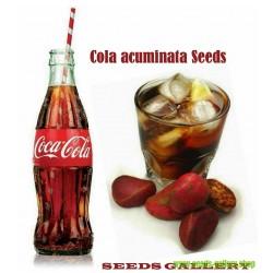 Sementes de NOZ-DE-COLA - Coca Cola