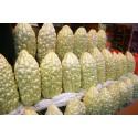 Graines de Kumquat Géant (Fortunella Margarita) résistent au gel -10 C