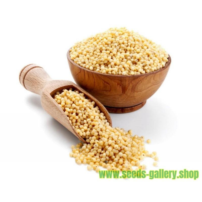 Proso Seme - Lek Za Bubrege (Panicum miliaceum)