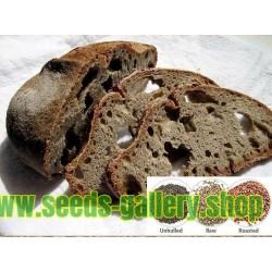 Graines de Citrouille Mini LIL'PUMP-KE-MON