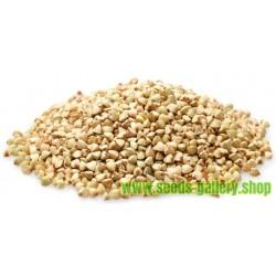 Buckwheat Seeds (Fagopyrum esculentum)