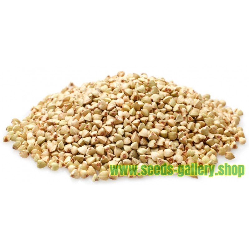 Buckwheat Seeds (Fagopyrum esculentum)