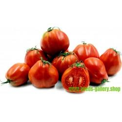RED PEAR PIRIFORM Tomat Fröer