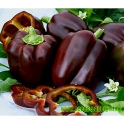 Graines Poivron 'Chocolate Beauty'