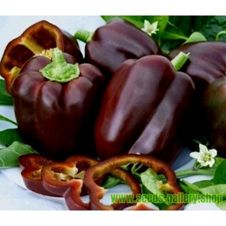 Sweet Pepper Seeds 'Chocolate Beauty'