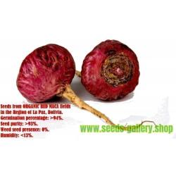 Maca 50.000 Organic Seeds (Lepidium meyenii)
