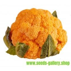 Semillas de Coliflor Naranja