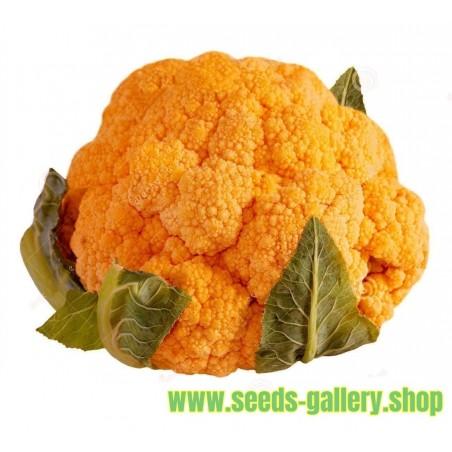 Blumenkohl orange Samen Früh + Herbst Saatgut