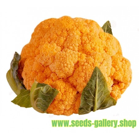Orange Cauliflower Seeds