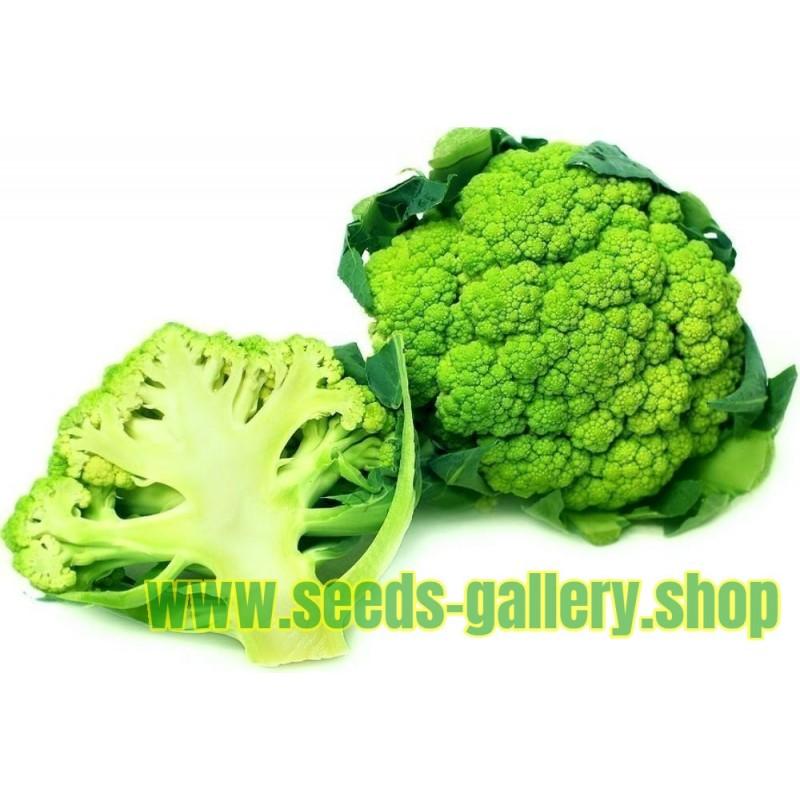 Green Cauliflower Seeds