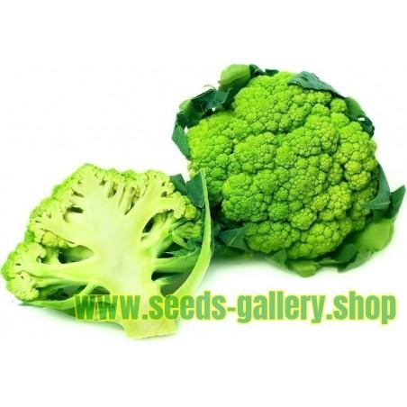 Zeleni Karfiol Seme