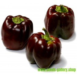 Sweet Pepper Seeds 'Chocolate Beauty'