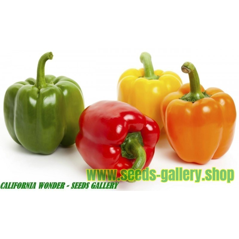 Sweet Pepper Seeds California Wonder
