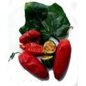 Graines de fruit de l'Hala (Pandanus tectorius)