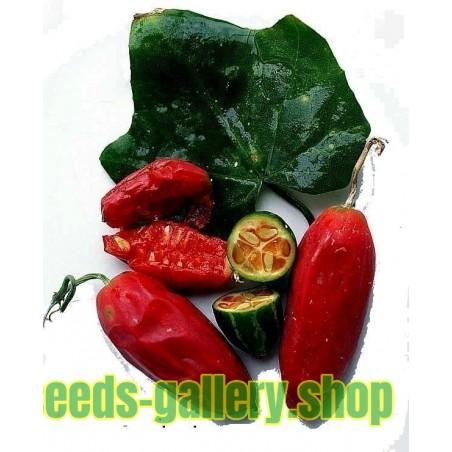 Sementes de Cabaça Escarlate, Kowai (coccinia grandis)