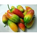 Bilberry - Whortleberry Seeds (Vaccinium myrtillus)