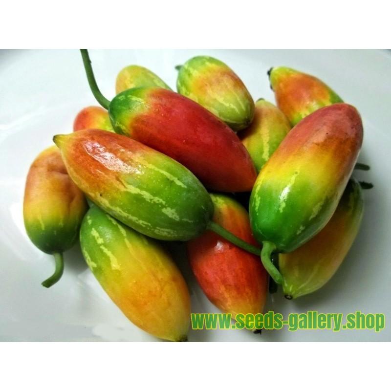 Σπόροι Κόκκινο Κολοκύθα (Coccinia grandis)