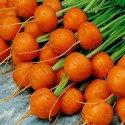 Sementes de Cenoura Paris Market