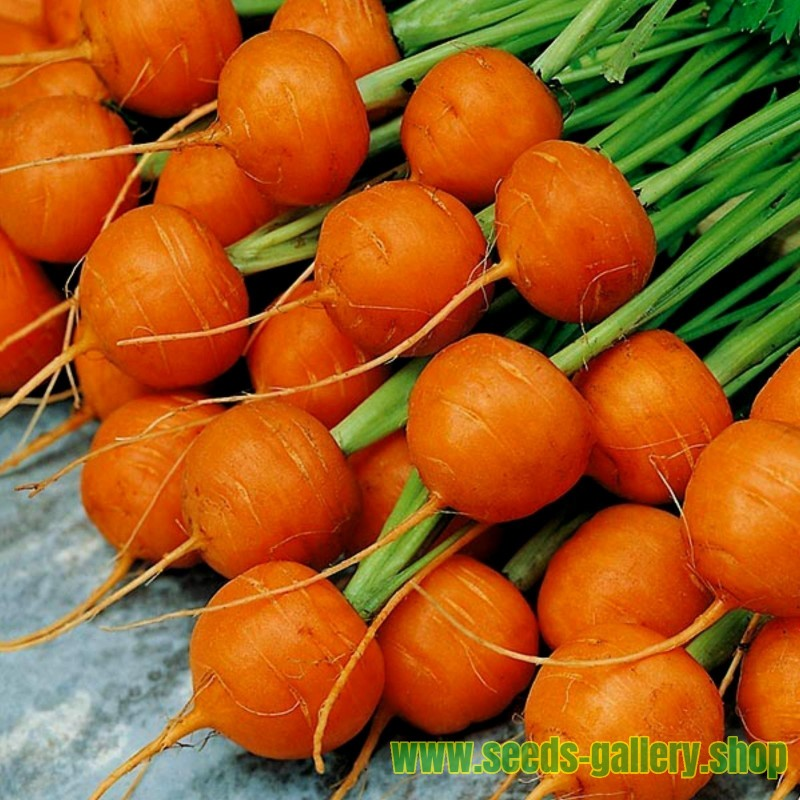 Semillas Zanahoria Redonda De Paris