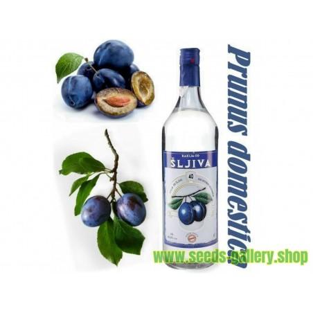 Graines de Prune Serbes (Prunus domestica)