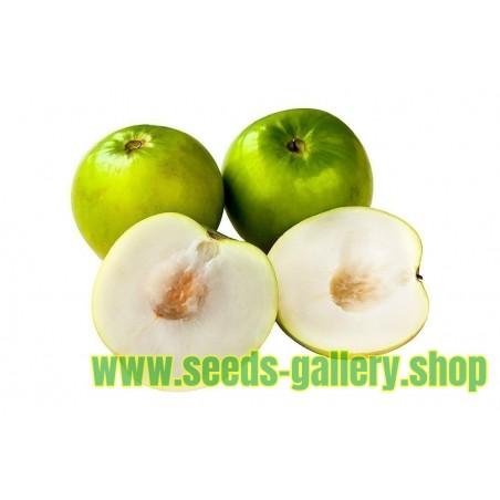 Semi di Pianta del Pane - frutta esotica (Monstera deliciosa)