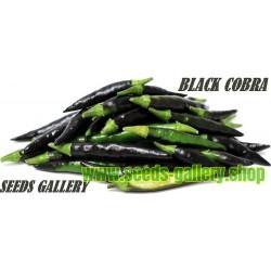 "Schwarzer Chili Samen BLACK COBRA – ""GOAT'S WEED"""