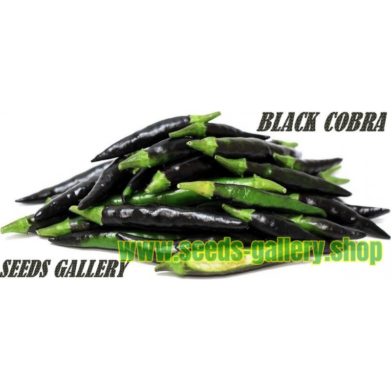 Black Cobra Chili Seeds (C. annuum)