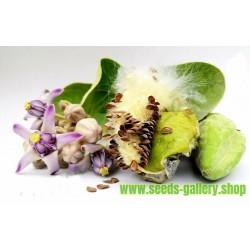 Σπόροι Arqa - Calotropis Gigantea - το φαρμακευτικό φυτό