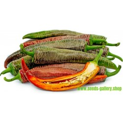 Thai-Ingwer, großer Galgant Samen (Alpinia galanga)
