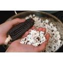 Black Popcorn Corn Dakota Seeds
