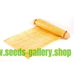 Echte Papyrus - Zyperngras Samen (Cyperus papyrus)