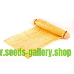 Sementes de Papiro (Cyperus papyrus)