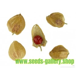 Ashwagandha - Indian Ginseng Seeds (Withania Somnifera)