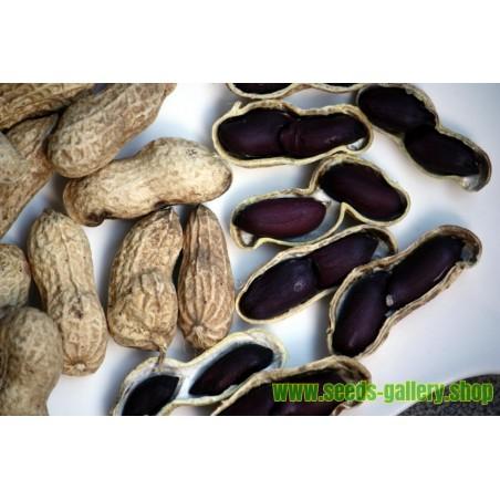Graines de Arachide Noire (Arachis hypogaea)