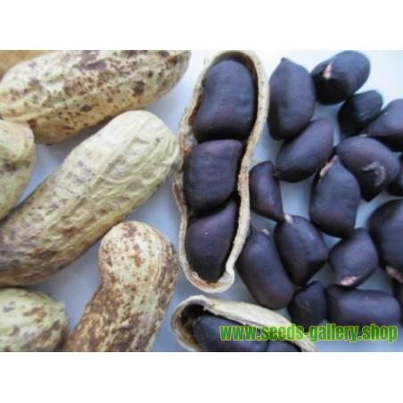 Schwarze Erdnuss Samen (Arachis hypogaea)
