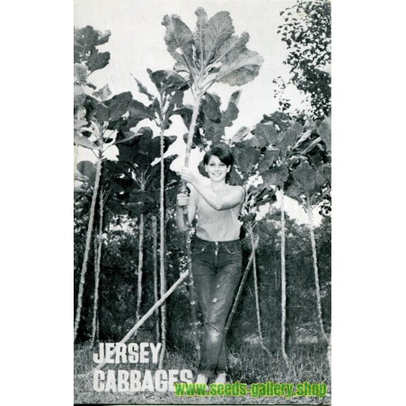 Graines Le chou géant de Jersey (brassica oleracea var. longata)