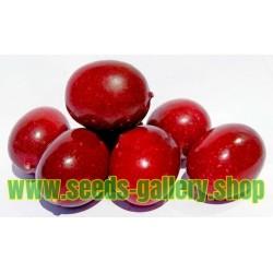 Semi di maracuja selvaggio, cespuglio frutto della passione (Passiflora foetida)