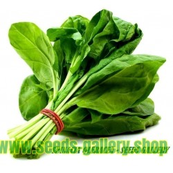 Spinach Seeds Matador