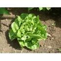 Σπόροι Μαρούλι Πράσινο Mignonette