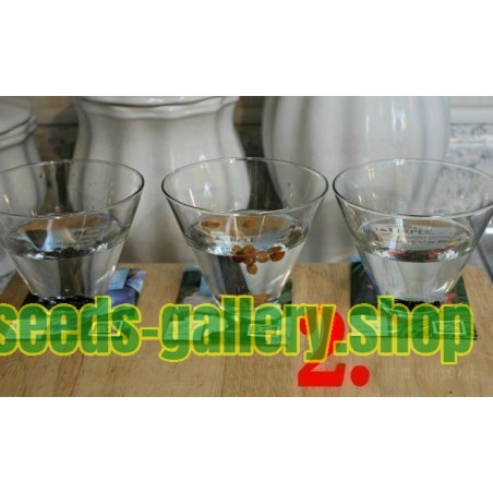 Propagation - Sowing Passiflora Seeds