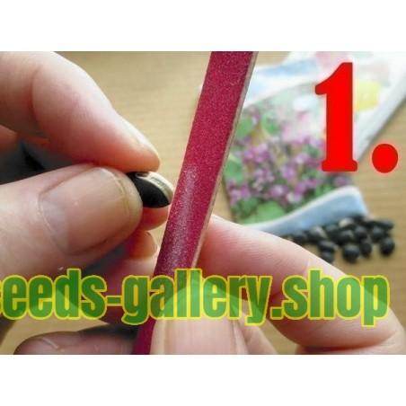 Passiflora - Aussaatanleitung - Vermehrung - aus Samen ziehen