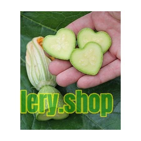 Brune D'Hiver Lettuce Seeds