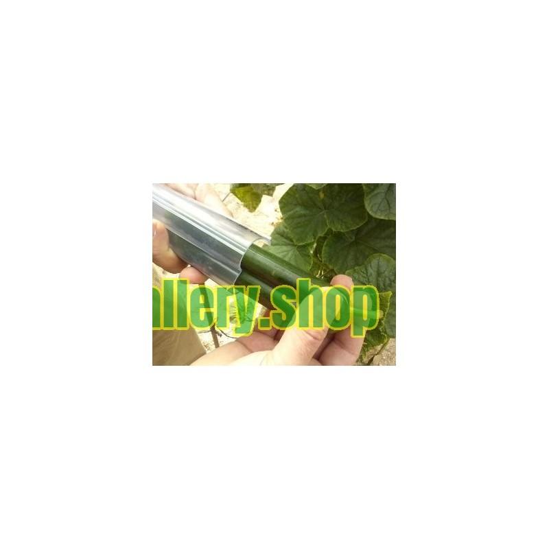 Graines de Palmier Nain, Palmier Doum (Chamaerops humilis L.)