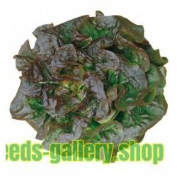 Brune D'Hiver grönsallat Fröer